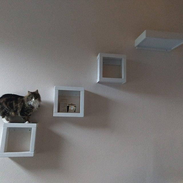 cat shelf house